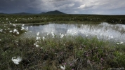 Andy Hay/RSPB Images. The Flow Country Scotland's largest area of peatlands and blanket bog