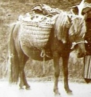 Horses in Celtic Mythology | Transceltic - Home of the