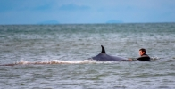 John Lowry rescues whale. Image from Belfast Telegraph.