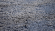 Latest Loch Ness unexplained sighting